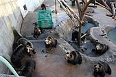 07.11.15.北海道.熊牧場:一堆熊