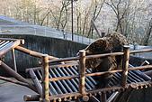 07.11.15.北海道.熊牧場:在高架上的熊