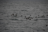 07.11.14.北海道.太陽宮殿:湖面上剛好有一群不知道什麼樣的鳥類飛過
