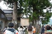 08.05.08.立山黑部(5):美女杉