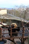 07.11.15.北海道.熊牧場:熊