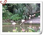 Taipei Zoo:nEO_IMG_Taipei Zoo130.jpg