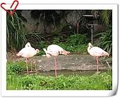 Taipei Zoo:nEO_IMG_Taipei Zoo133.jpg