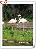 Taipei Zoo:nEO_IMG_Taipei Zoo134.jpg