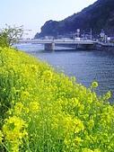 20070302伊豆賞櫻五日遊:ㄚ~不是要拍櫻花嗎???