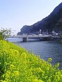 20070302伊豆賞櫻五日遊:油菜花也不錯啦
