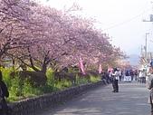 20070302伊豆賞櫻五日遊: