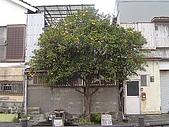 20070302伊豆賞櫻五日遊:金蘋果~不要亂叫....注意氣質ㄋ