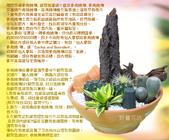 多肉植物:多肉植物.jpg
