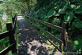 北部景點:DSC_0116台北-自來水博物館步道-木板棧道.jpg