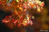 秋季福壽山農場‧楓紅:DSC_2682s福壽山楓紅-秋季楓葉-秋天.jpg