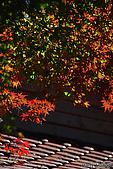 秋季福壽山農場‧楓紅:DSC_2658_福壽山楓紅-秋季楓葉-秋天.JPG
