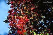 秋季福壽山農場‧楓紅:DSC_2670_福壽山楓紅-秋季楓葉-秋天.JPG