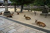 2010京阪神奈之旅奈良東大寺:2010-0830-1-029.JPG