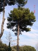 2007義大利蜜月旅行:2007-1-017.JPG