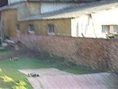 20071110:照片 018.jpg