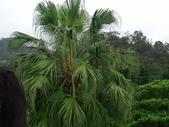 雨毛毛動物遊:IMG_3311.JPG