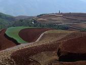 東川紅土地--樂譜凹,  花石頭,  紅土映像賓館, 千年龍樹: