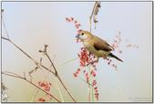 高屏溪尋鳥:7D2_7646.jpg