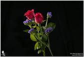 花卉攝影練習:5D3_2165.jpg