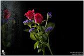 花卉攝影練習:5D3_2161.jpg