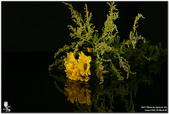 花卉攝影練習:5D3_2172.jpg