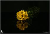 花卉攝影練習:5D3_2178.jpg
