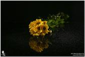 花卉攝影練習:5D3_2202.jpg