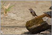 茄萣濕地:IMG_2174.jpg