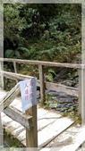 2015元旦連假‧新竹尖石‧竹東‧內灣‧新光‧鎮西堡‧神木區:神木-29.jpg