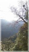 2015元旦連假‧新竹尖石‧竹東‧內灣‧新光‧鎮西堡‧神木區:神木-11.jpg