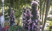 故宮-菊世無雙:IMAG0207.jpg
