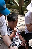 小粗坑賞桐-大山背賞螢搞笑一日遊:DPP_0020.JPG