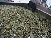 2011.6.6端午節午時茶採製:DSC09695.JPG