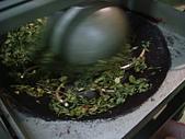 2011.6.6端午節午時茶採製:DSC09675.JPG