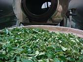 2011.6.6端午節午時茶採製:DSC09672.JPG