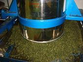 2011.6.6端午節午時茶採製:DSC09687.JPG