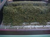 2011.6.6端午節午時茶採製:DSC09693.JPG
