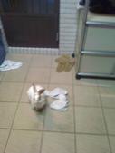 寵物兔---可愛的小肥:相片0100.jpg