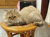 96.5.26貓咪新照片:P5260225