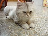 96.5.26貓咪新照片:P5260228
