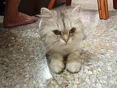 96.5.26貓咪新照片:P5260229