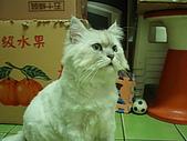 96.5.26貓咪新照片:P5260244