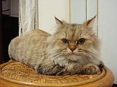 96.5.26貓咪新照片:P5260220