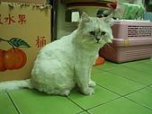 96.5.26貓咪新照片:P5260240