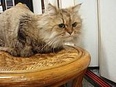 96.5.26貓咪新照片:P5260221