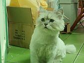 96.5.26貓咪新照片:P5260237