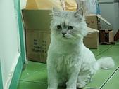 96.5.26貓咪新照片:P5260236