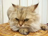 96.5.26貓咪新照片:P5260224