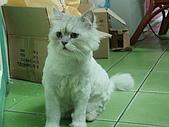 96.5.26貓咪新照片:P5260233